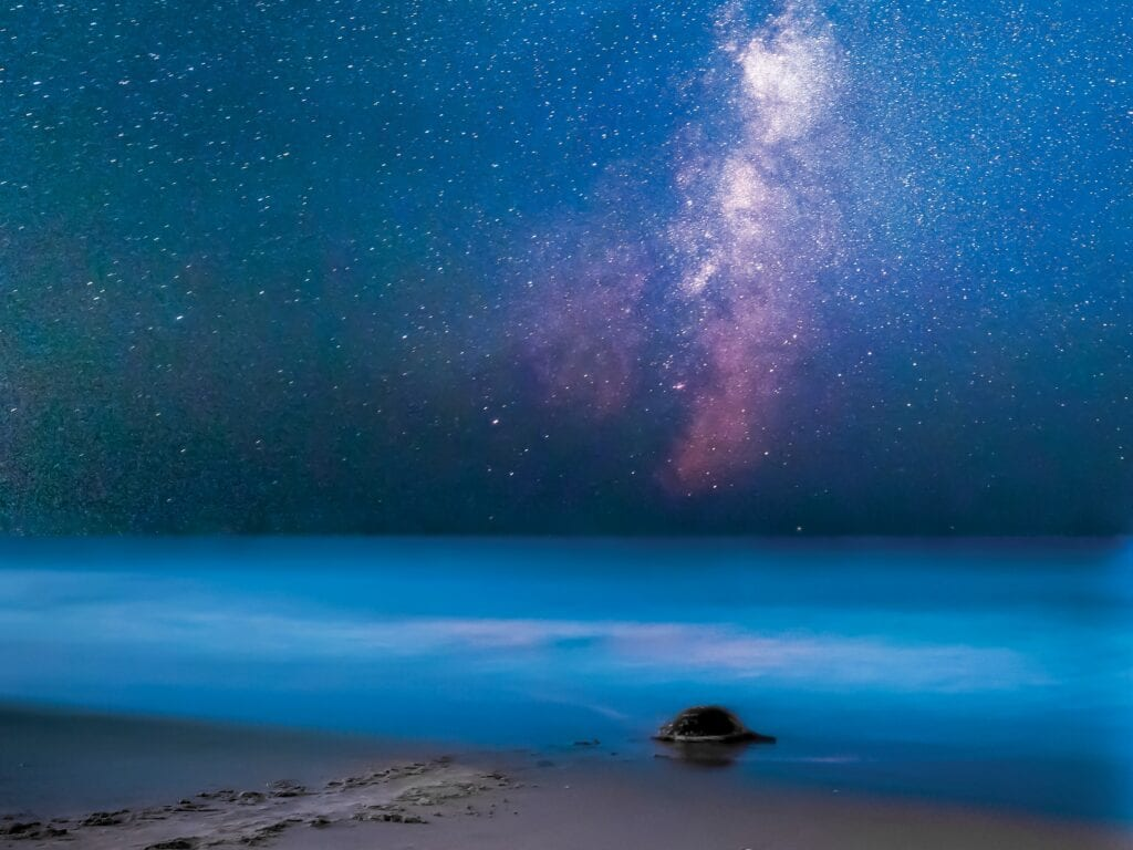 """Mary Lundburg's """"Milky Way Turtle"""" is hanging at the Punta Gorda Airport. COURTESY PHOTO"""