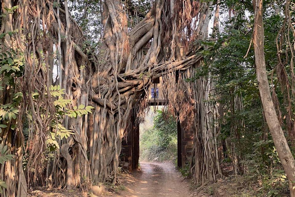 A forest path in India as seen on a tour with Greaves India, voted one of the world's best Tour Operators