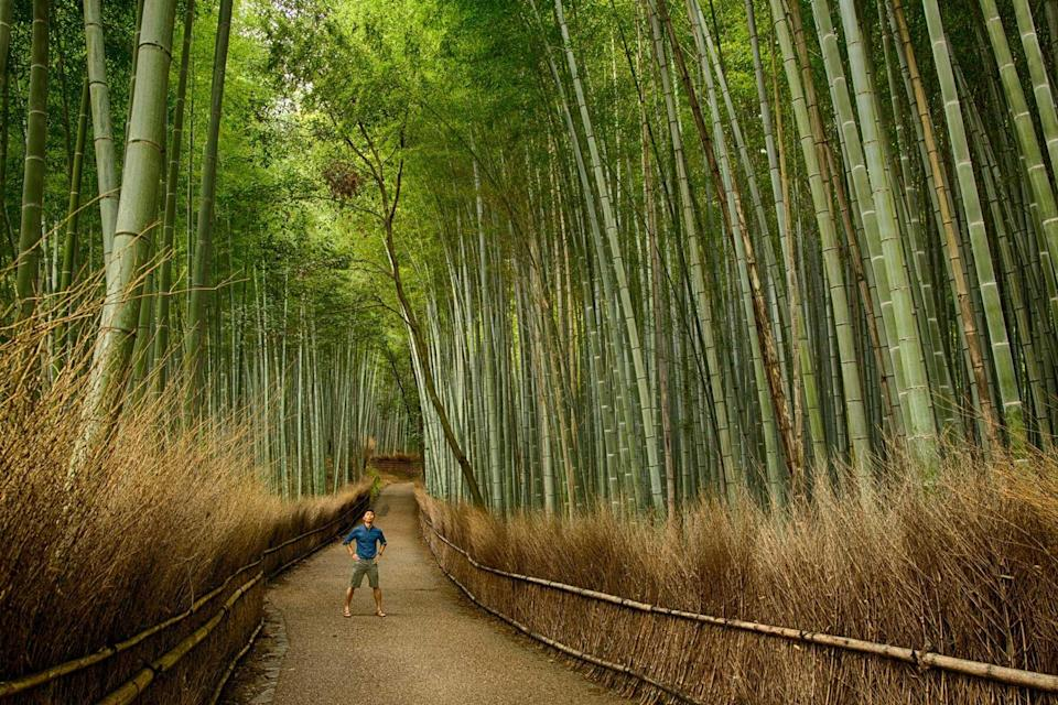 A man in a bamboo forest near Kyoto, on a tour with InsideJapan, voted one of the world's best Tour Operators
